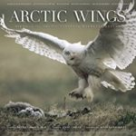 Arctic Wings
